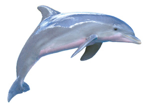 Dolphin Facts | Learn About Dolphins | Dolphin Quest