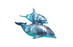 animalfacts-dqbdolphins