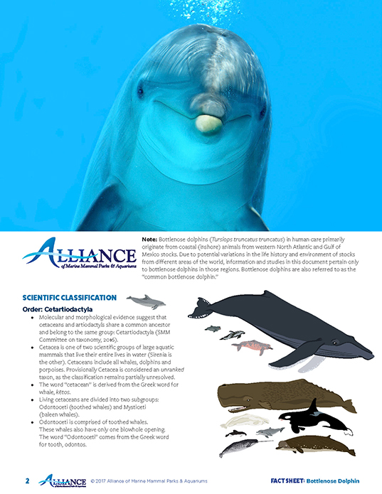 Dolphin Facts Learn About Dolphins Dolphin Quest