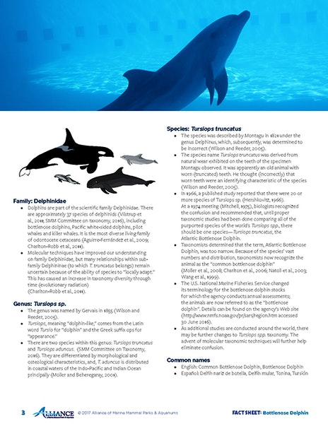 Dolphin Facts | Learn About Dolphins | Dolphin Quest - photo#42