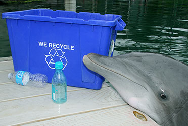 recycle.0515