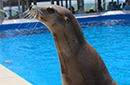 news_ammpa.sealion0305.sm