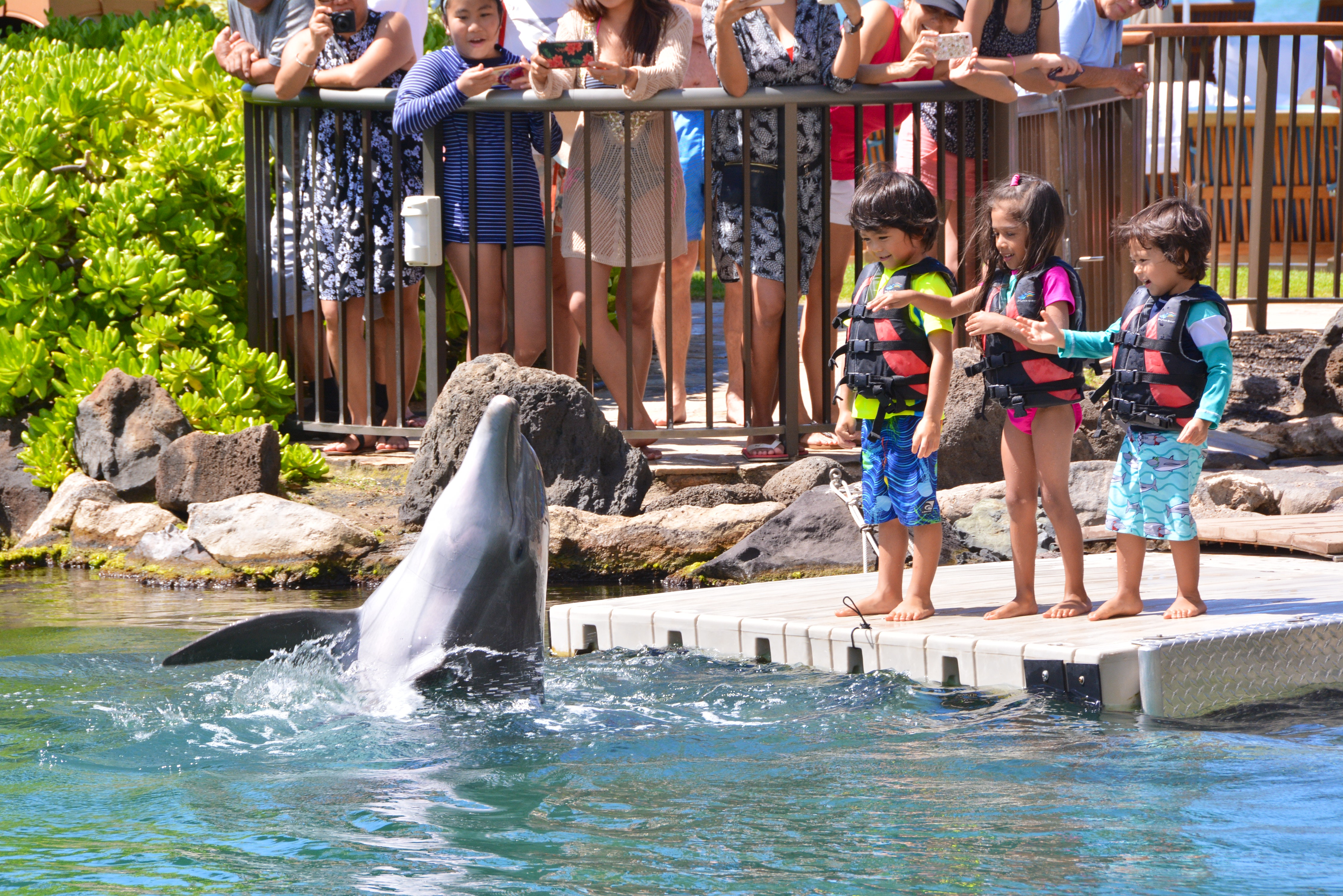 Dolphin Quest Education