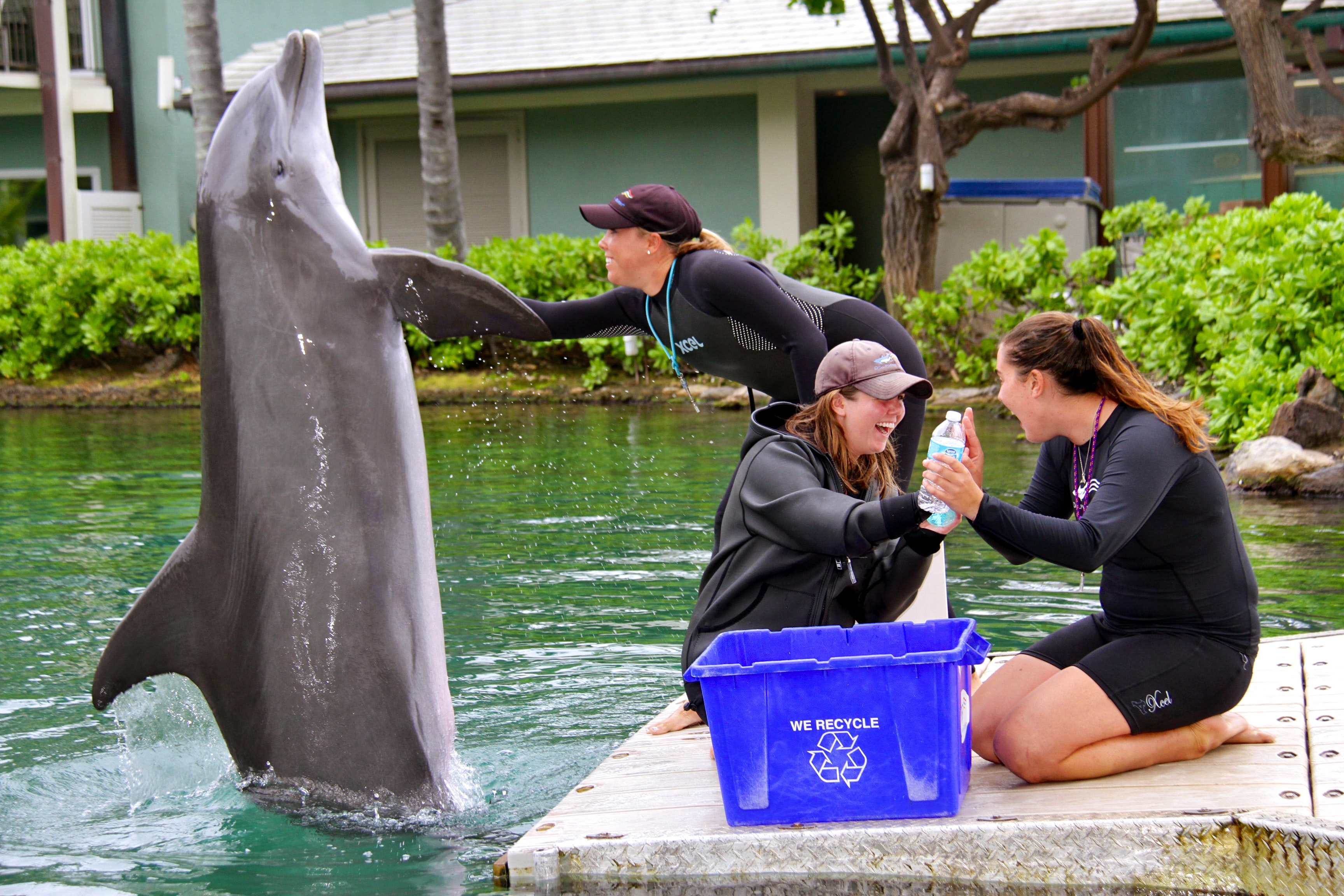 Dolphin Quest Conservation & Stewardship
