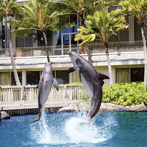 Dolphins at the Kahala Resort