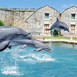 Dolphins at the National Museum of Bermuda