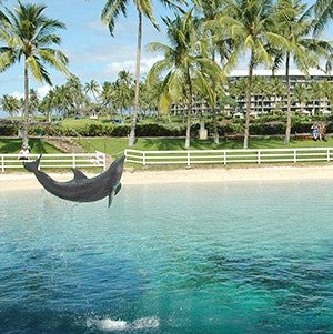 Dolphins at the Hilton Waikoloa Village