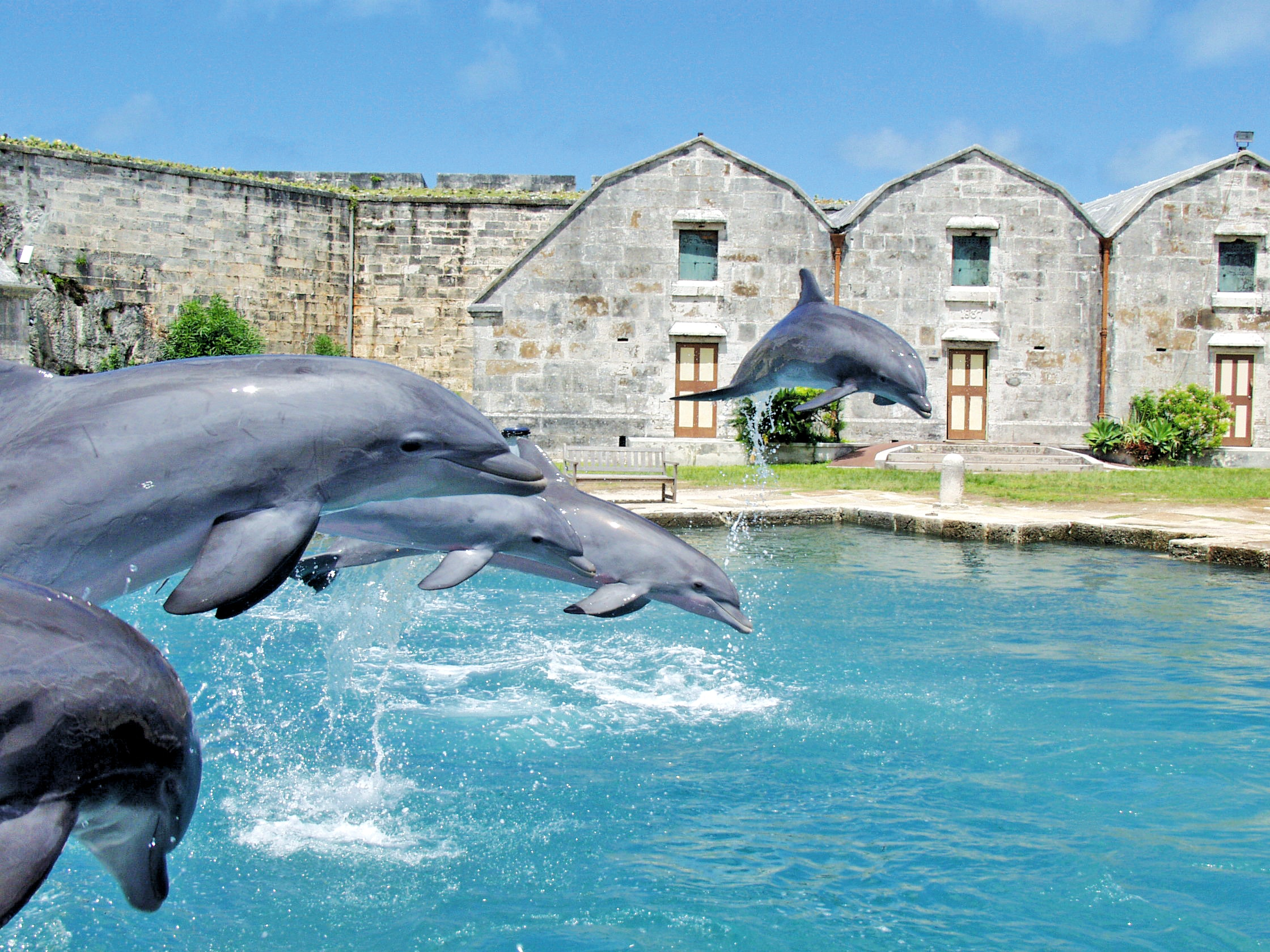 Dolphins jumping at Dolphin Quest Bermuda