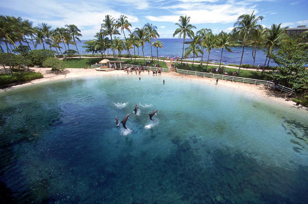 Dolphin Quest Locations Big Island Hawaii