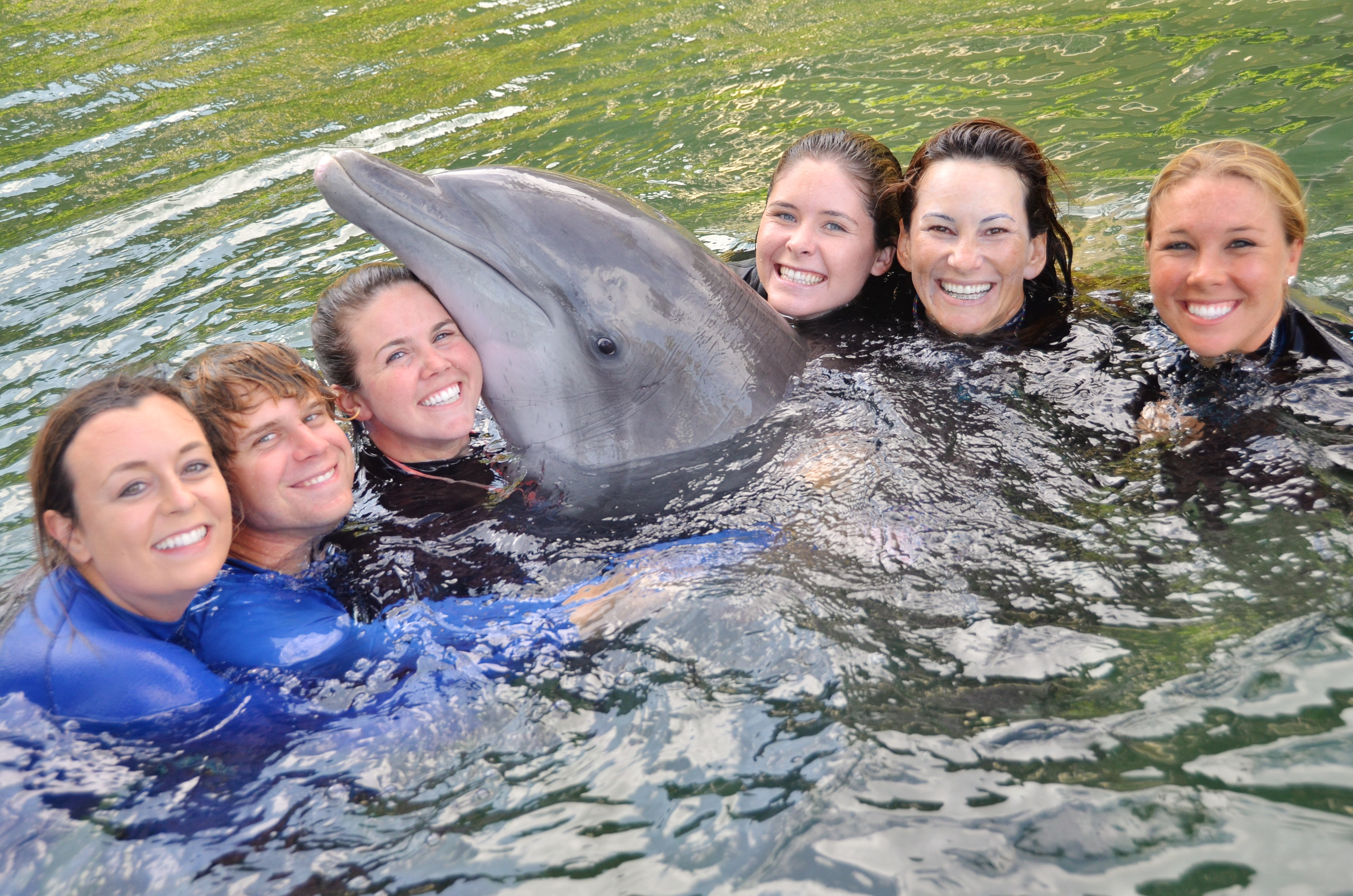 Dolphin Quest character and integrity