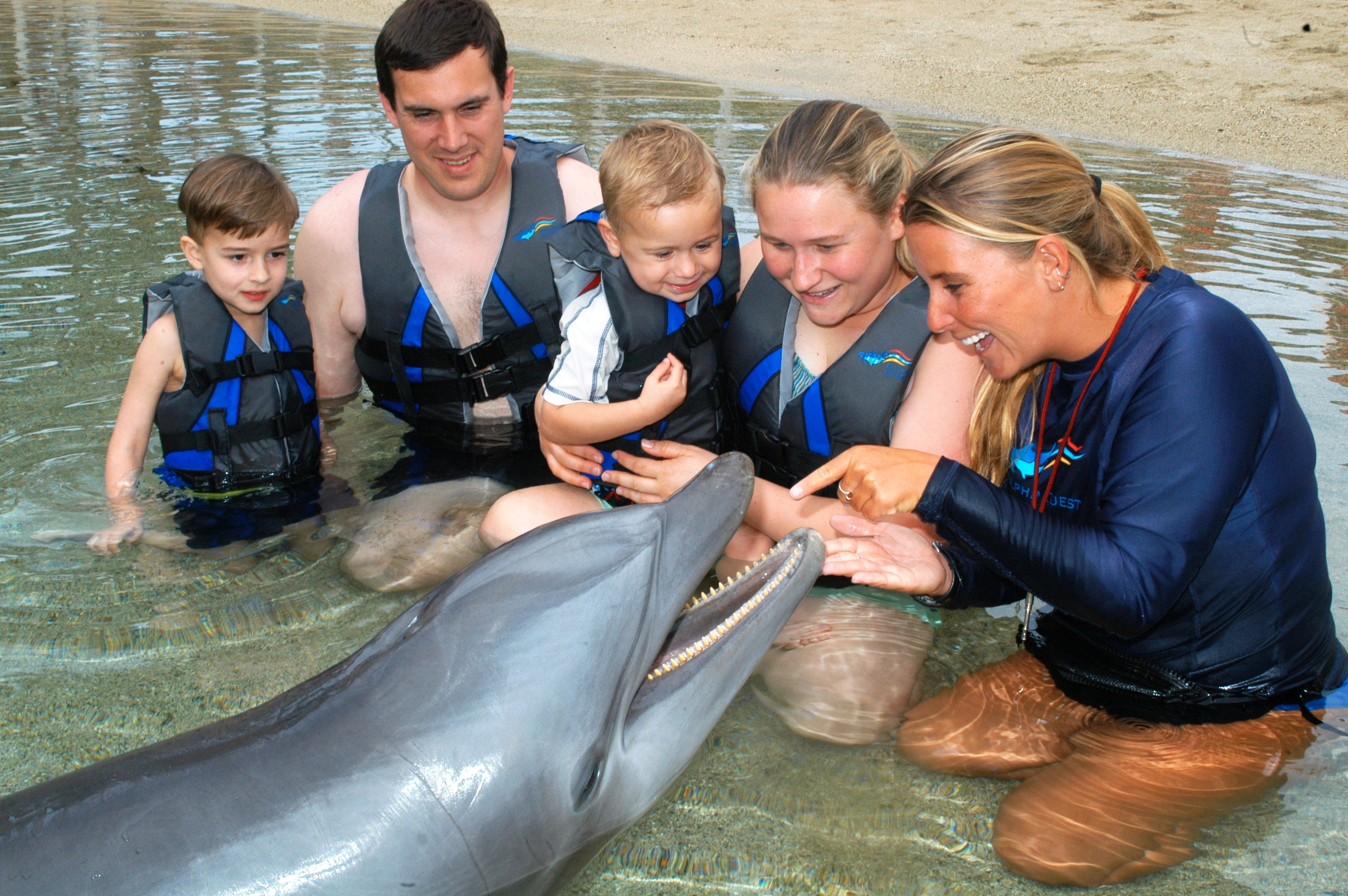 Dolphin Quest Open Communication