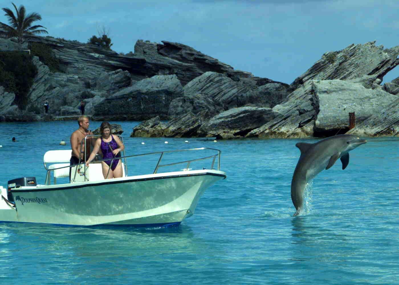 Dolphin Quest Fairmont Southampton Princess Hotel