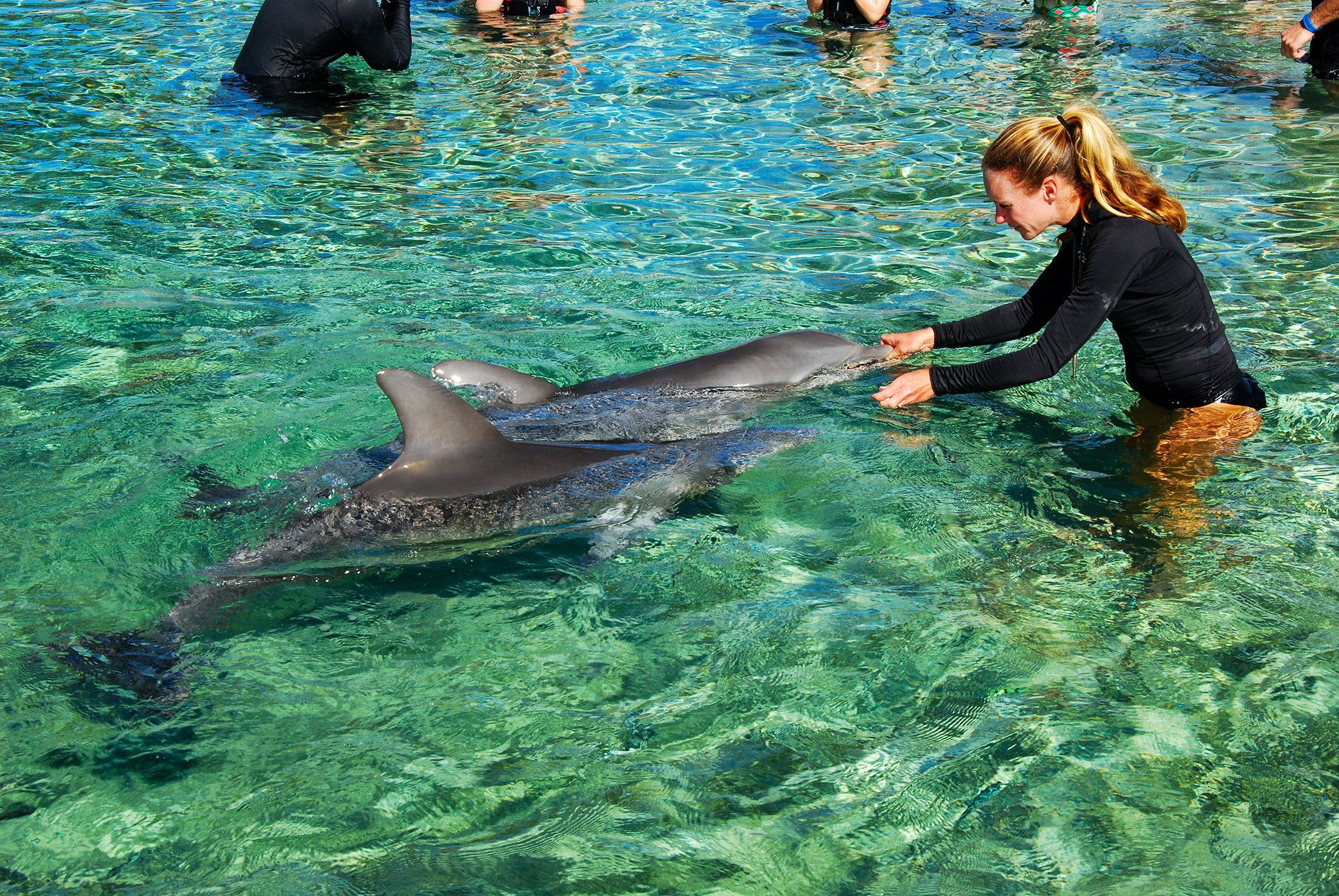 Dolphin mom with trainer