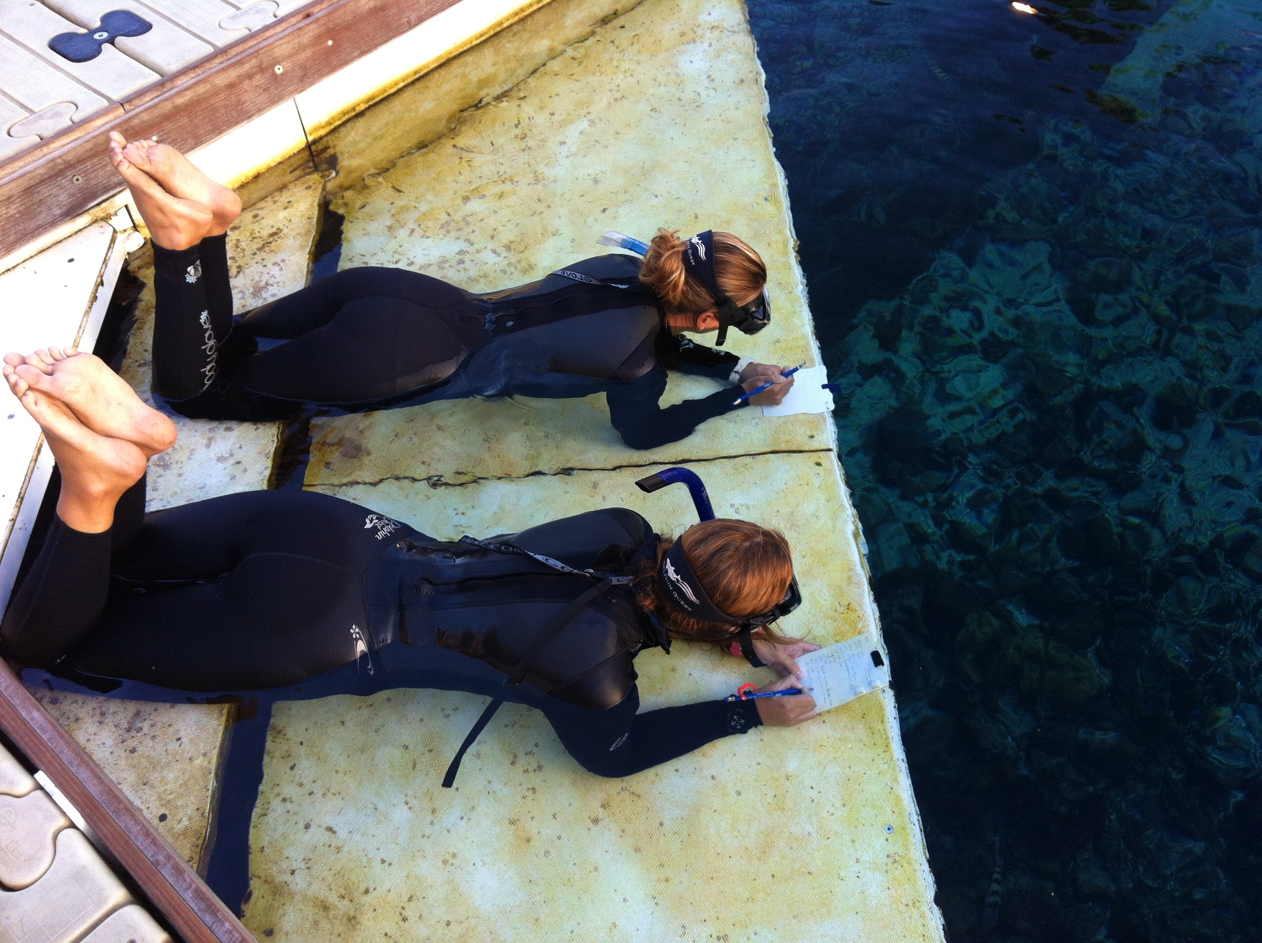 Trainers observing pregnant dolphins