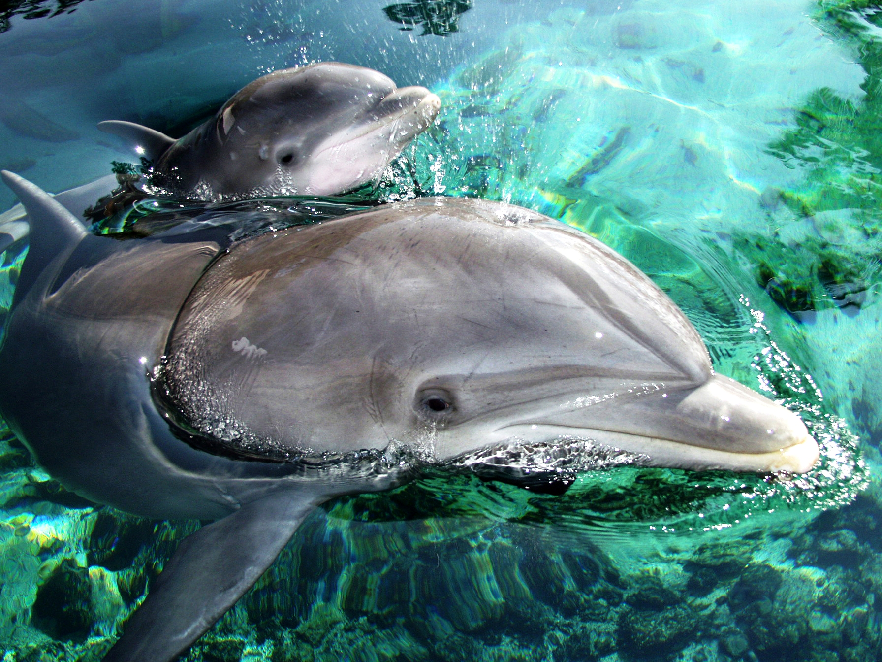 images of baby dolphins - photo #27