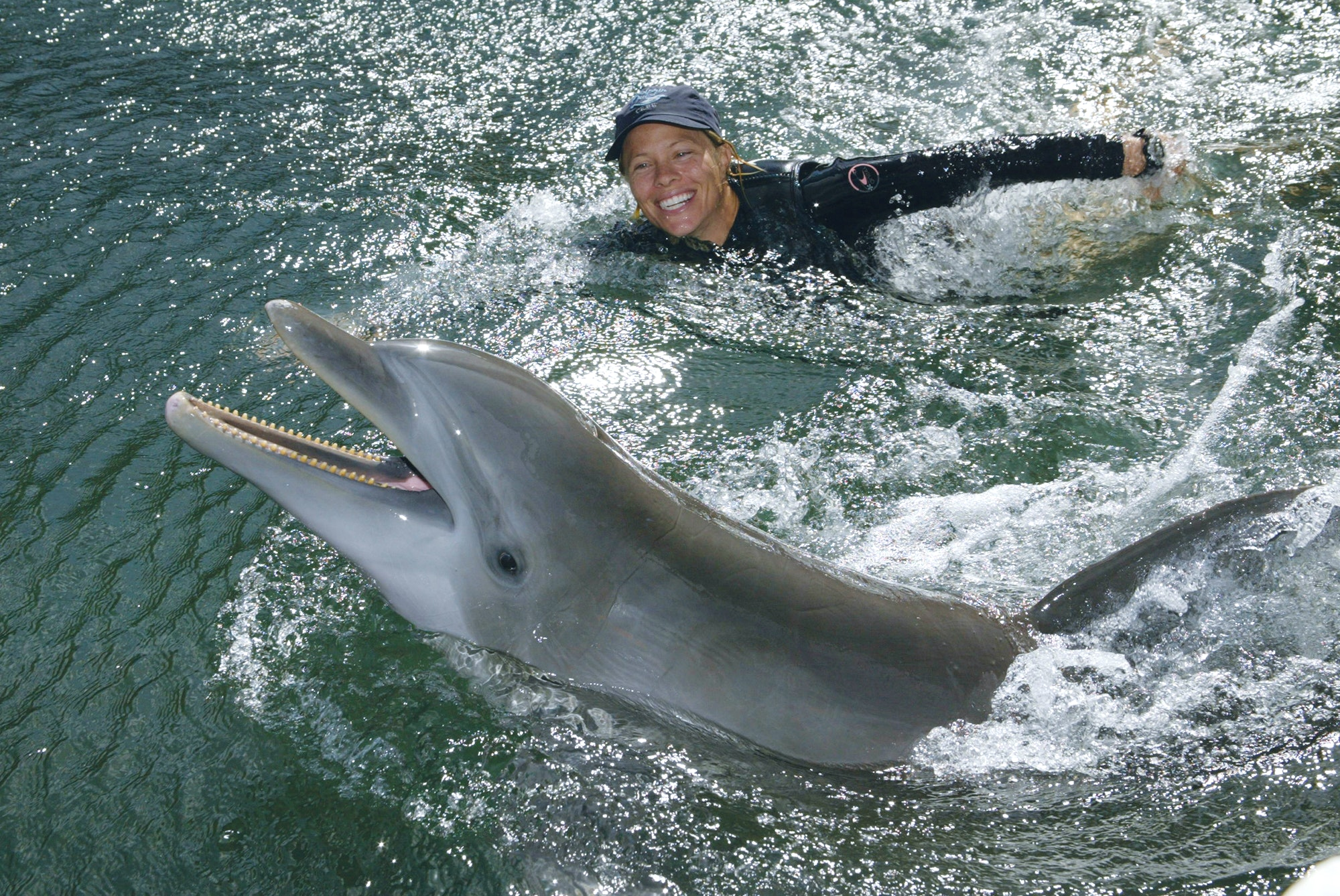 Animal trainer and dolphin