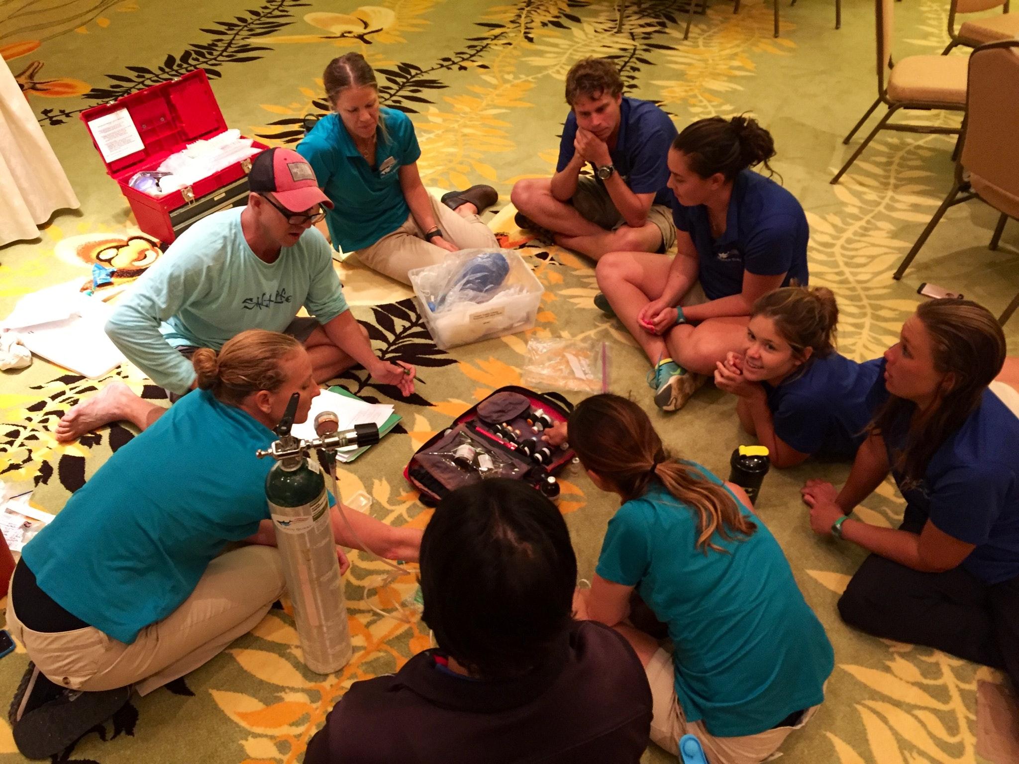 animal trainer tasks dolphin quest