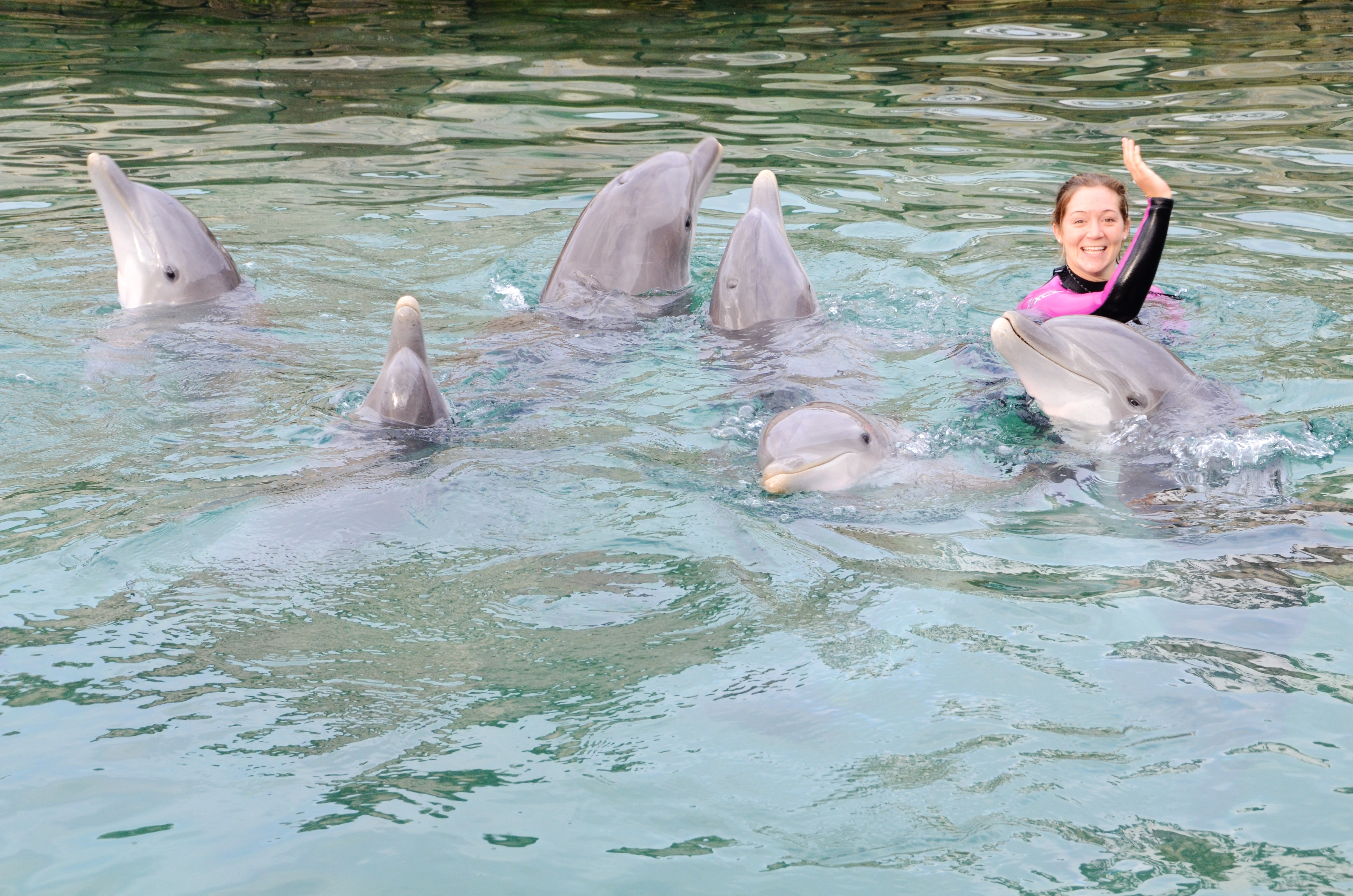 dolphin trainers with a group of dolphins