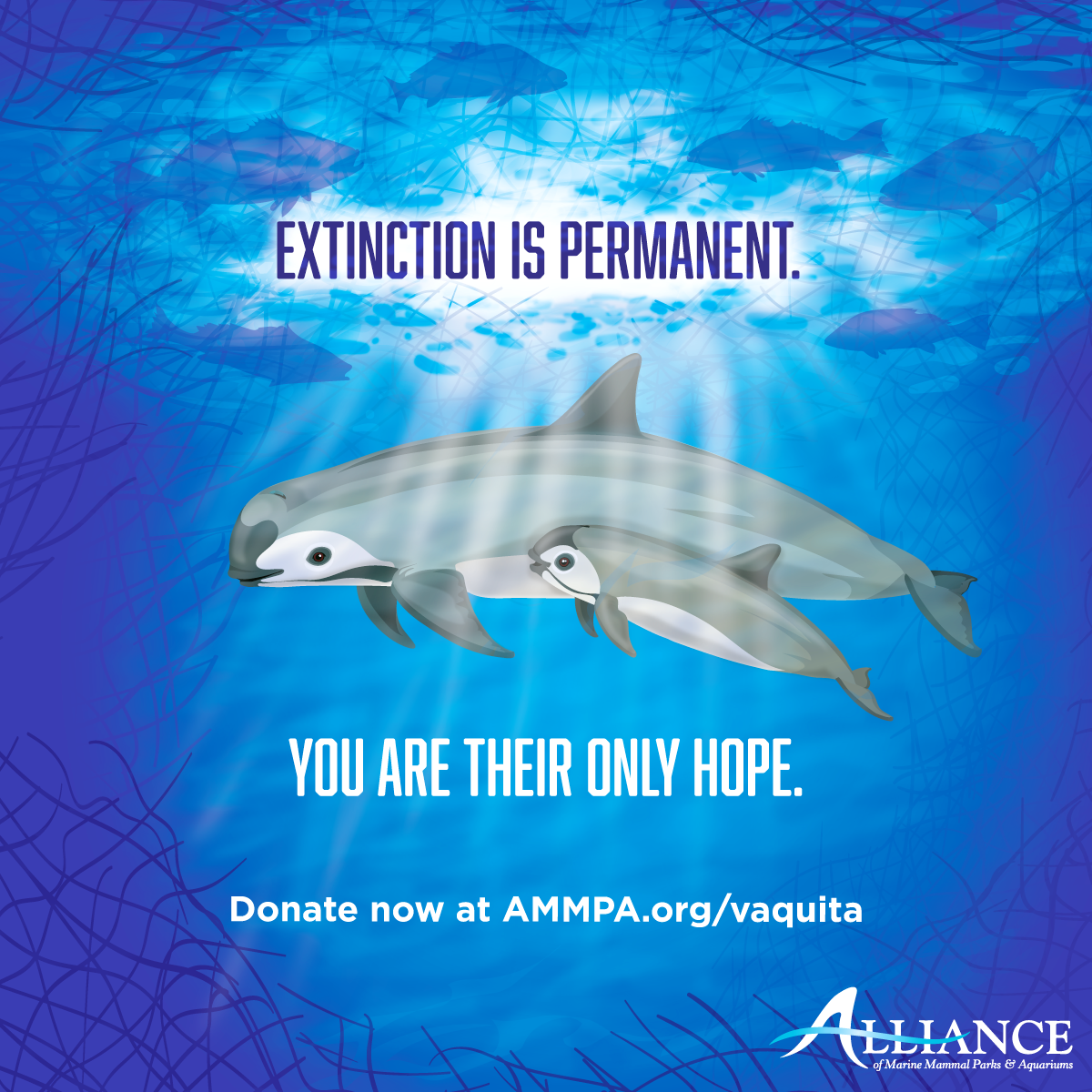 Vaquita graphic