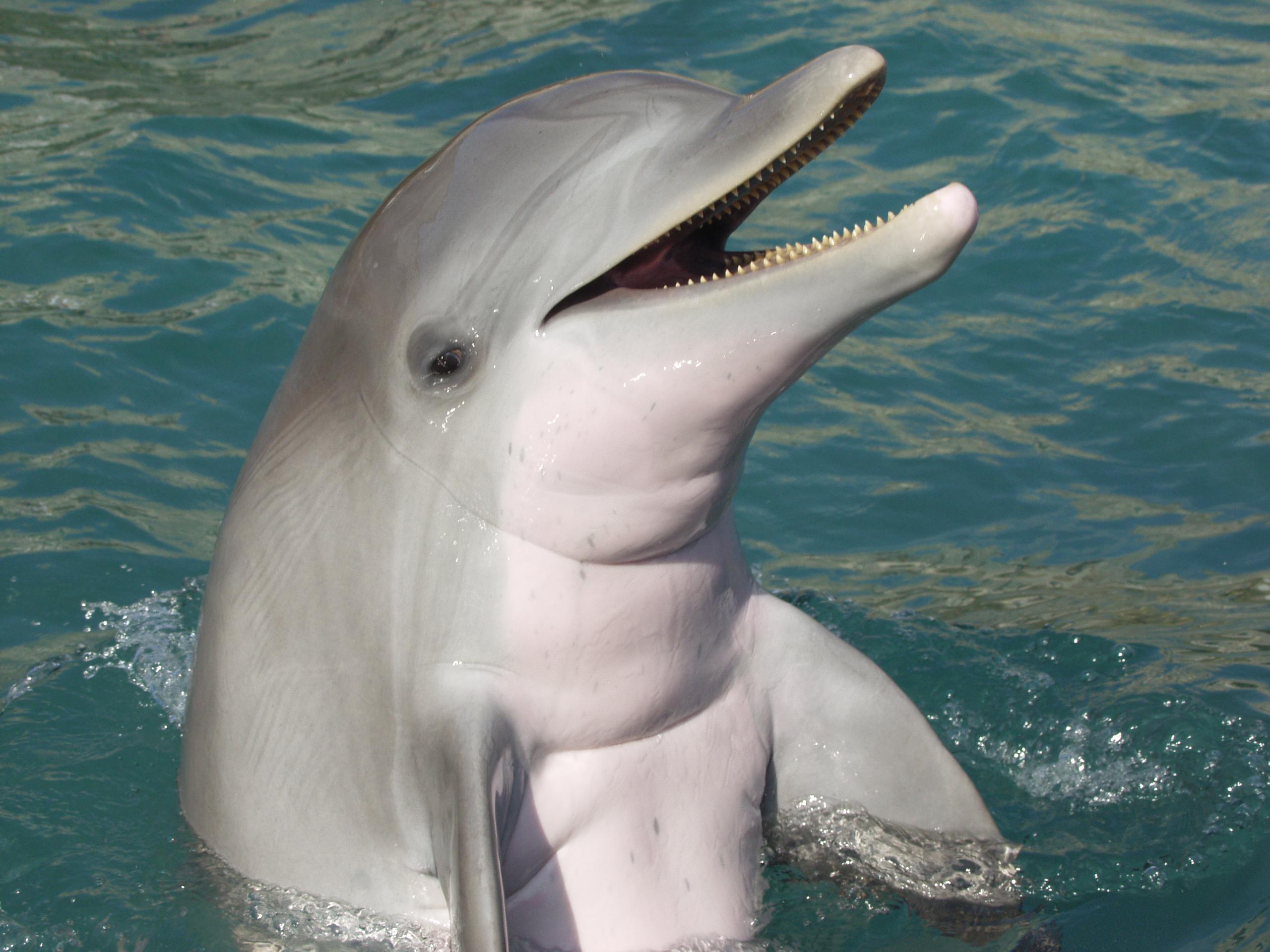 Dolphin Photos Dolphin Quest