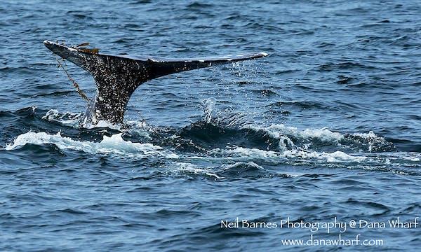 Grays-232-kelp-1000px