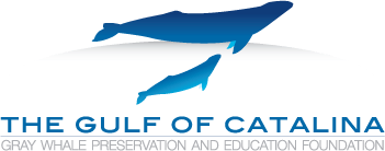 gray whale foundation