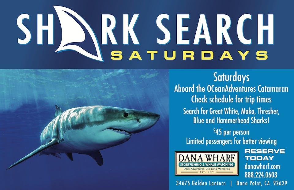 Shark Search Adventure Image 1