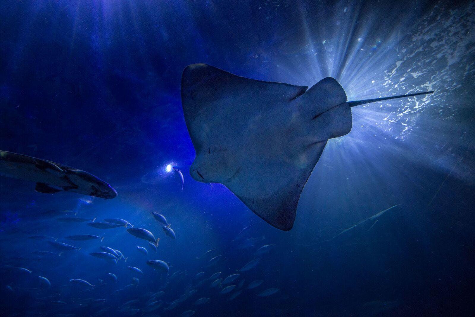 Monterey & Carmel w/ Aquarium Add on - Tour Photo 1 of 10