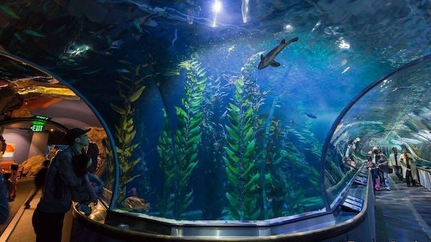 Aquarium of the Bay at Pier 39   Tower Tours