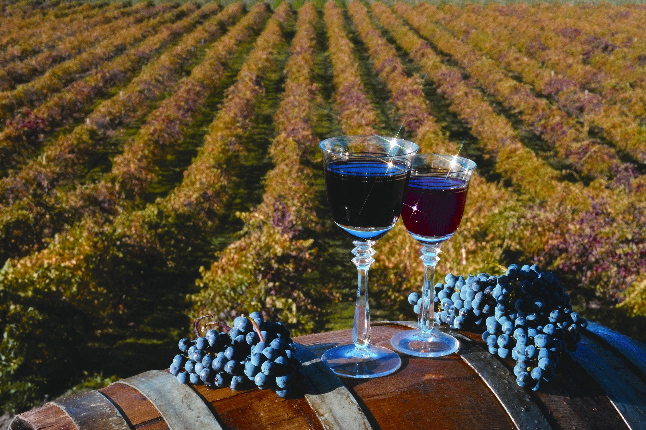 Wine Country Tour Tasting Experience image 2