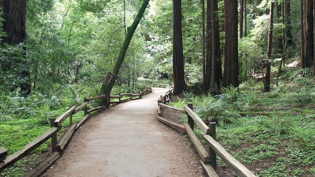 path through muir woods