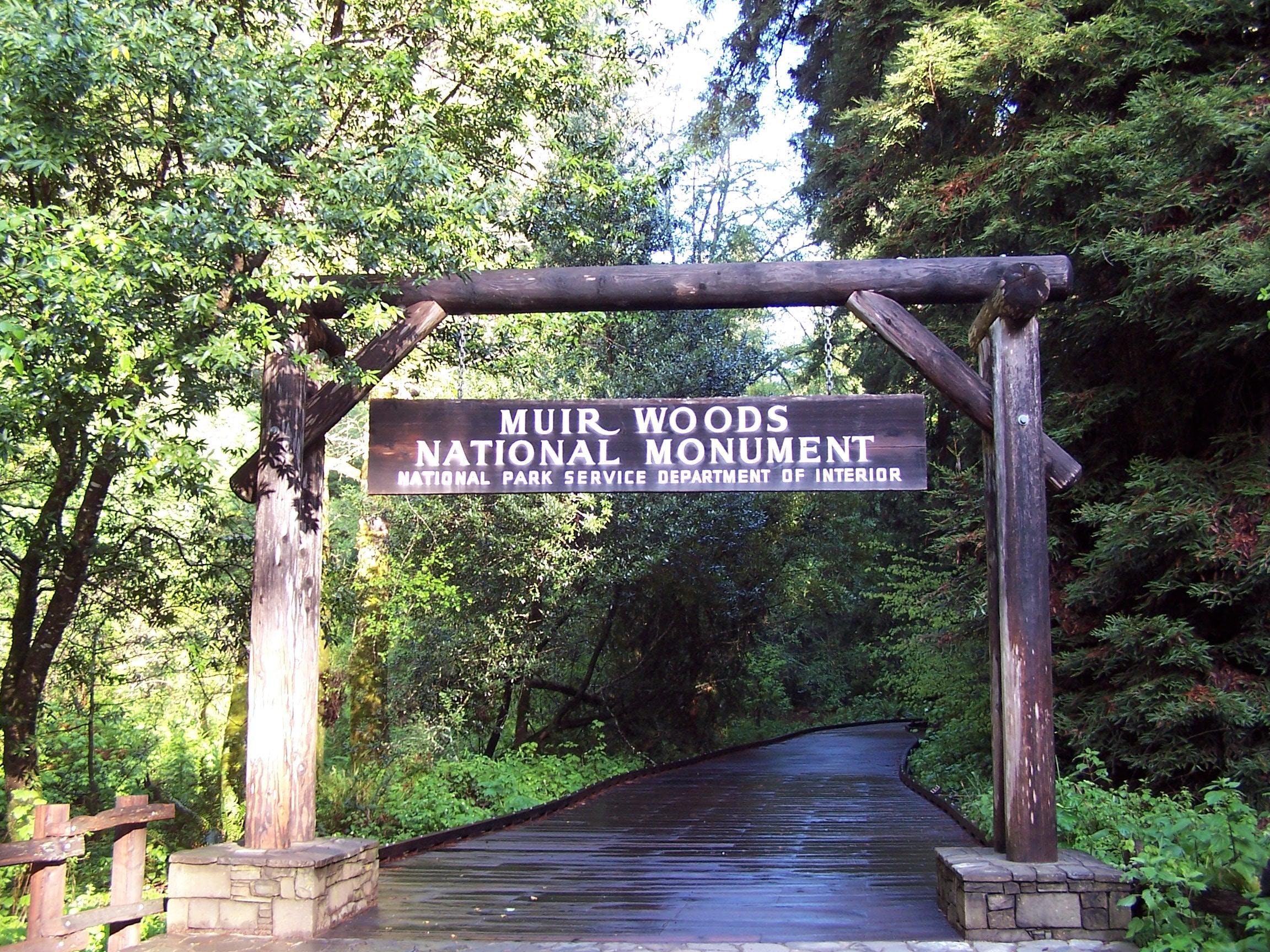 Muir Woods Tour w Sausalito Ferry Boat Return image 6