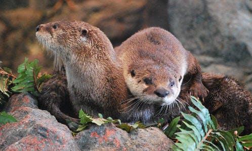 California's Redwoods w/ Aquarium Visit - Tour Photo 1 of 5