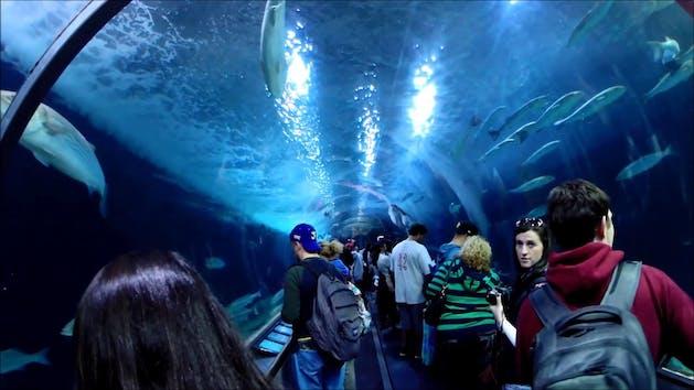 shark tank tunnel in aquarium