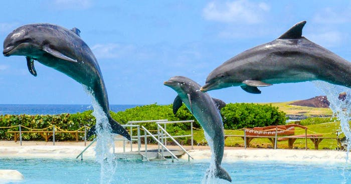 Roberts Auto Group >> Sea Life Park Dolphin Adventures - Oahu | Roberts Hawaii