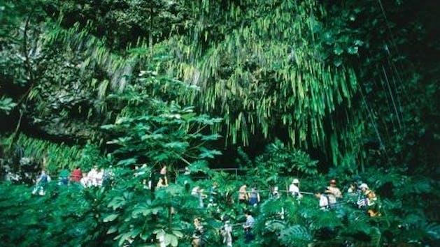 Roberts Auto Group >> One-Day – Kauai – Waimea Canyon Fern Grotto Tour   Roberts ...
