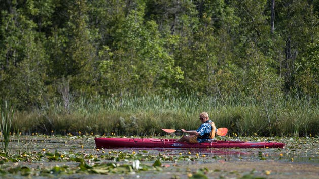 Man Kayaking on Ridges Wildlife Preserve Tour Cave Point Paddle & Peddle