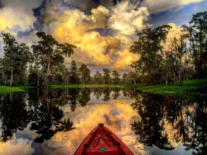Kayak New Orleans around the swamps