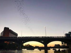 Bat Bridge Kayak Tour