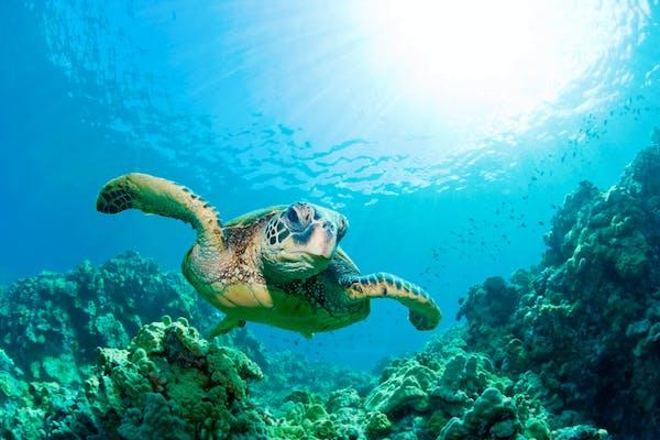 When Scuba Diving