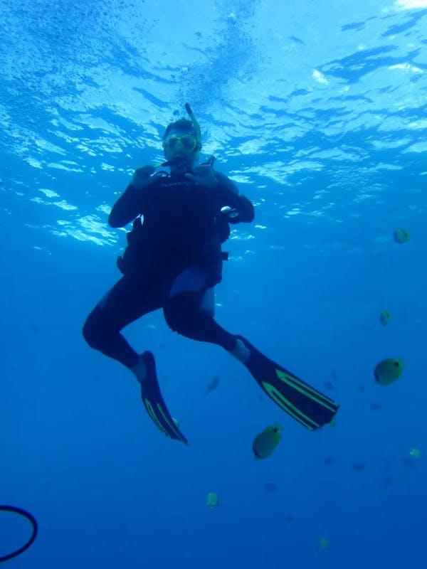 Scuba Diving Sharks Cove