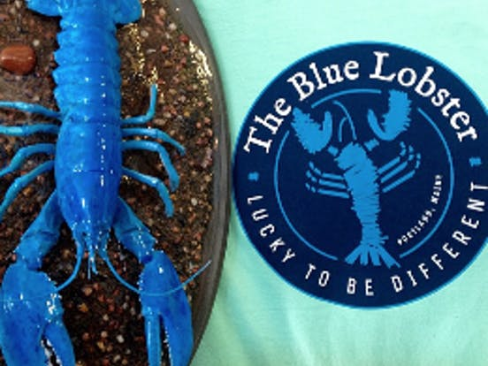 The Blue Lobster logo & toy
