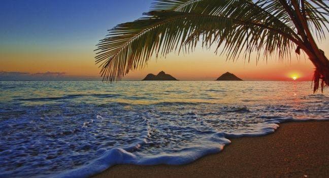 oahu s top 5 beaches north shore shark adventures