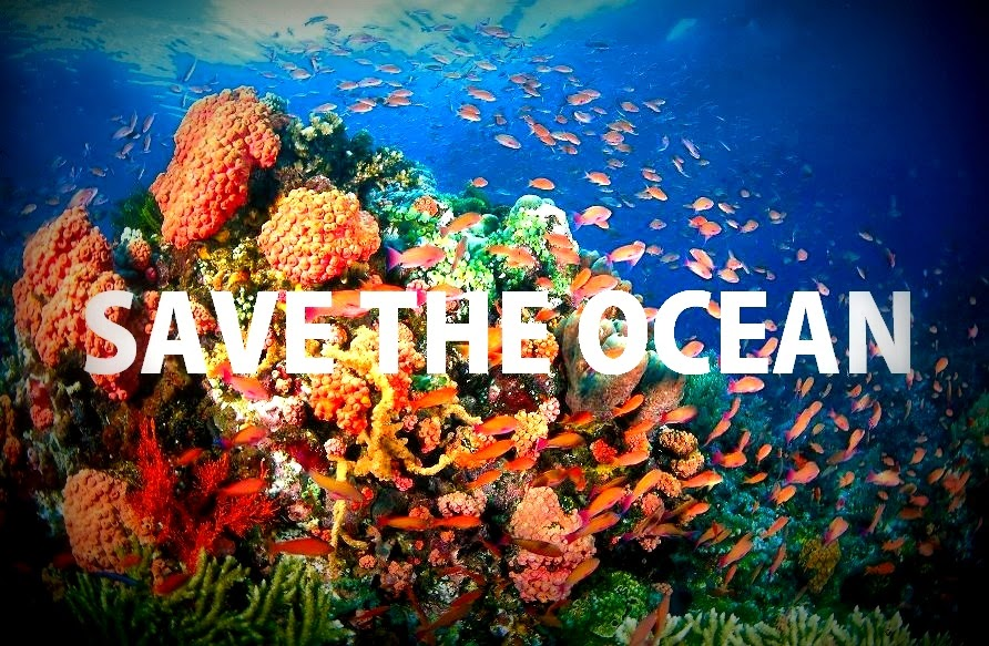 save the oceans Talks, people, playlists, topics, and events about save the ocean on tedcom.