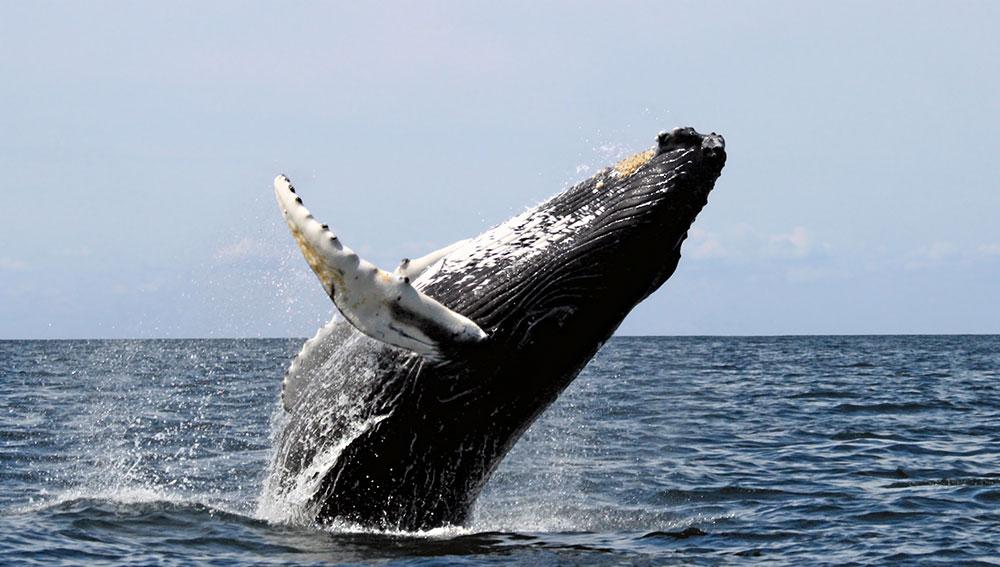 whale-03