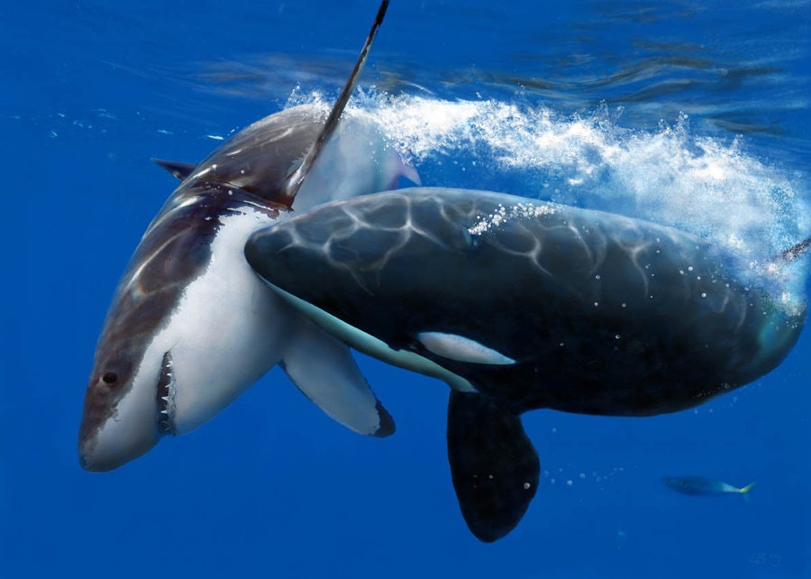 How much sperm whale weigh