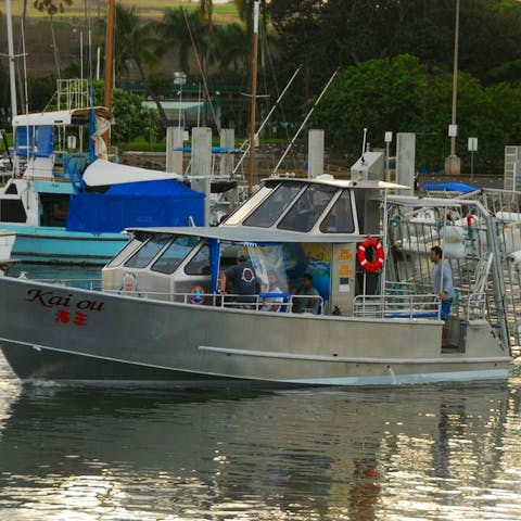 One of our shark diving boats