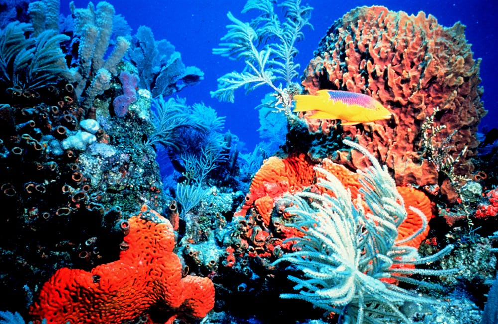 Image result for hawaii coral reefs