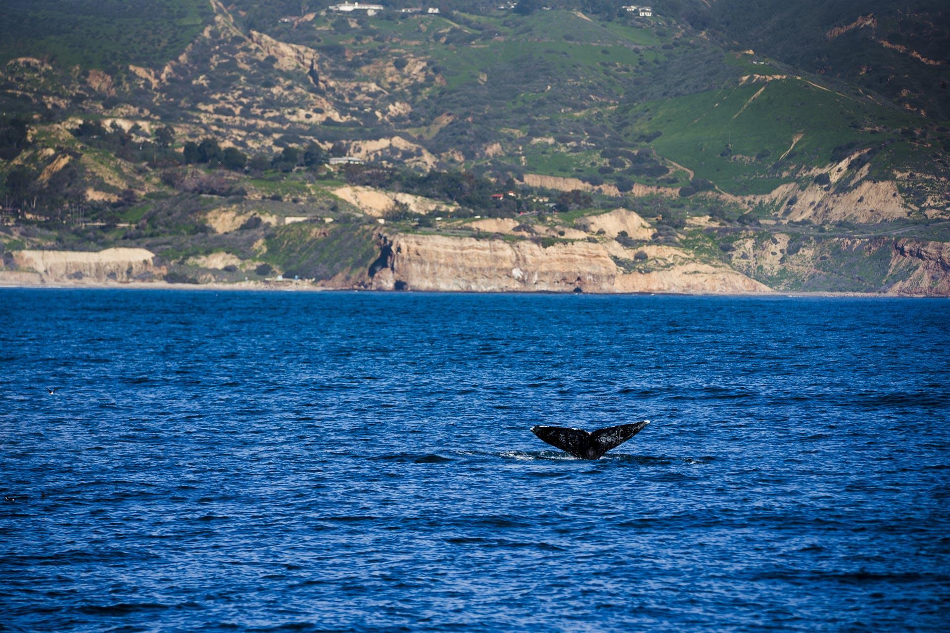 whale watching terranea