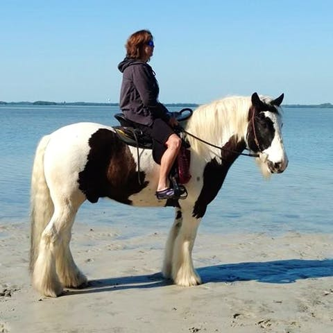 Beach Horses Sarasota The Best Beaches In World